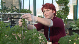 About 15% of the hospital's produce and 100% of its fresh herbs are grown onsite, in an organic greenhouse.